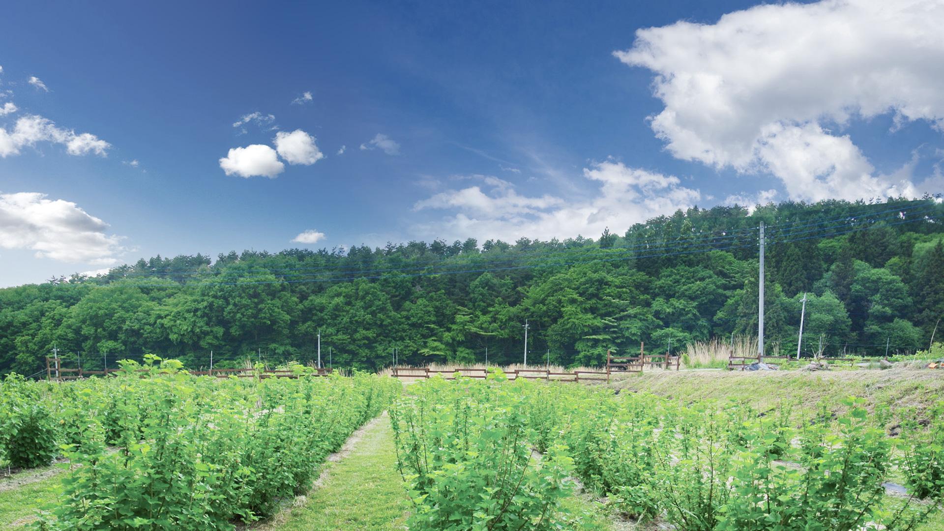 八ヶ岳高原の大地に広がる清里ジャムの自社農園